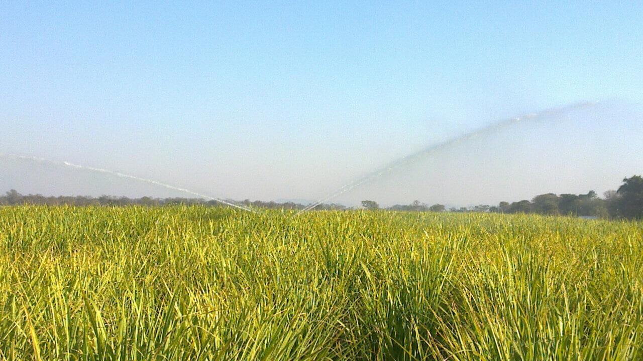 Rotrix-Africa-Cane-Master-300-Irrigation-System-12