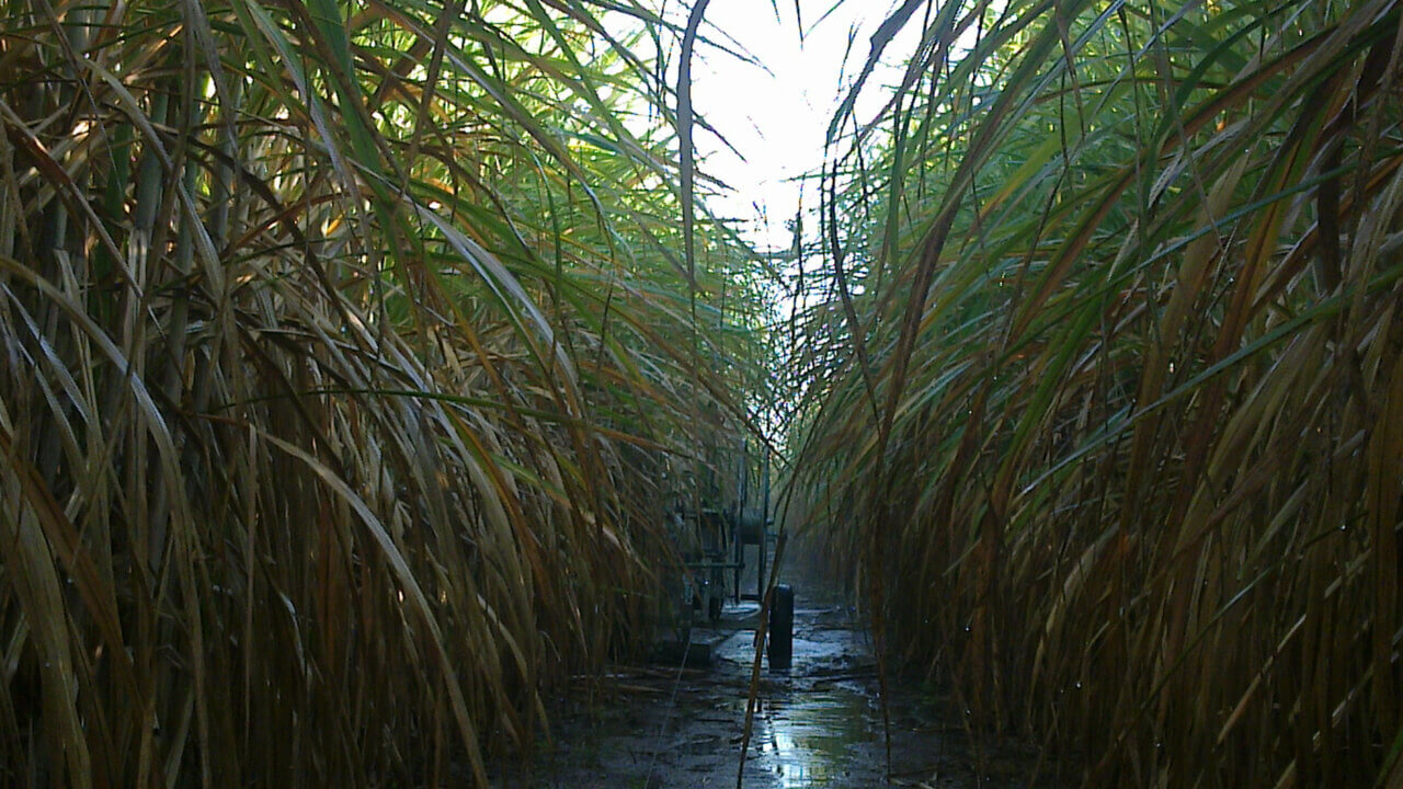Rotrix-Africa-Cane-Master-300-Irrigation-System-13
